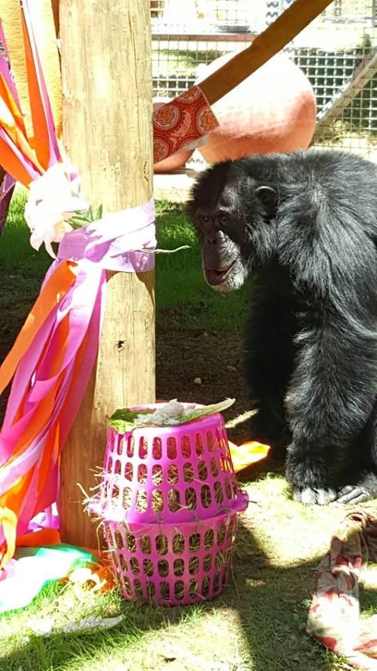 Primarily Primates Enrichment projects, Animal education