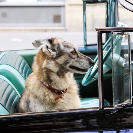 Best Dog Friendly Cars on the Market