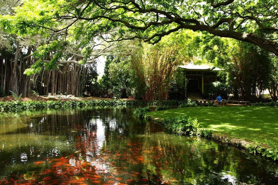 Moanalua Gardens Koi Pond, island of Oahu Garden park
