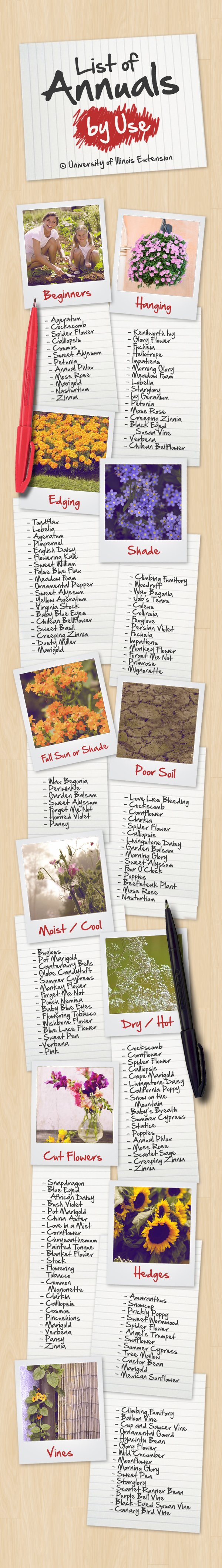 Annuals For Specific Uses   Gardening With Annuals