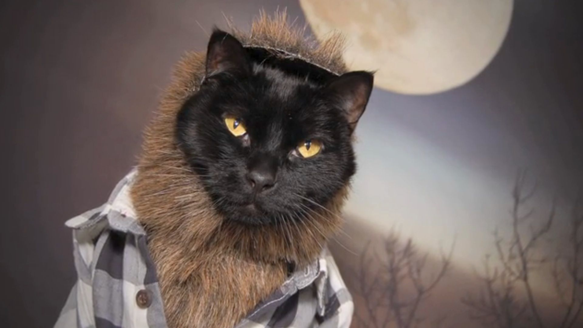 Super Amazing 100% Awesome Cat Calendar Exists — Seriously