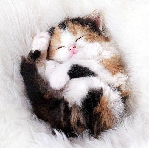 10 Cute Cat Pictures For Your Day Kittens Cutest Cute Animals Cute Cats