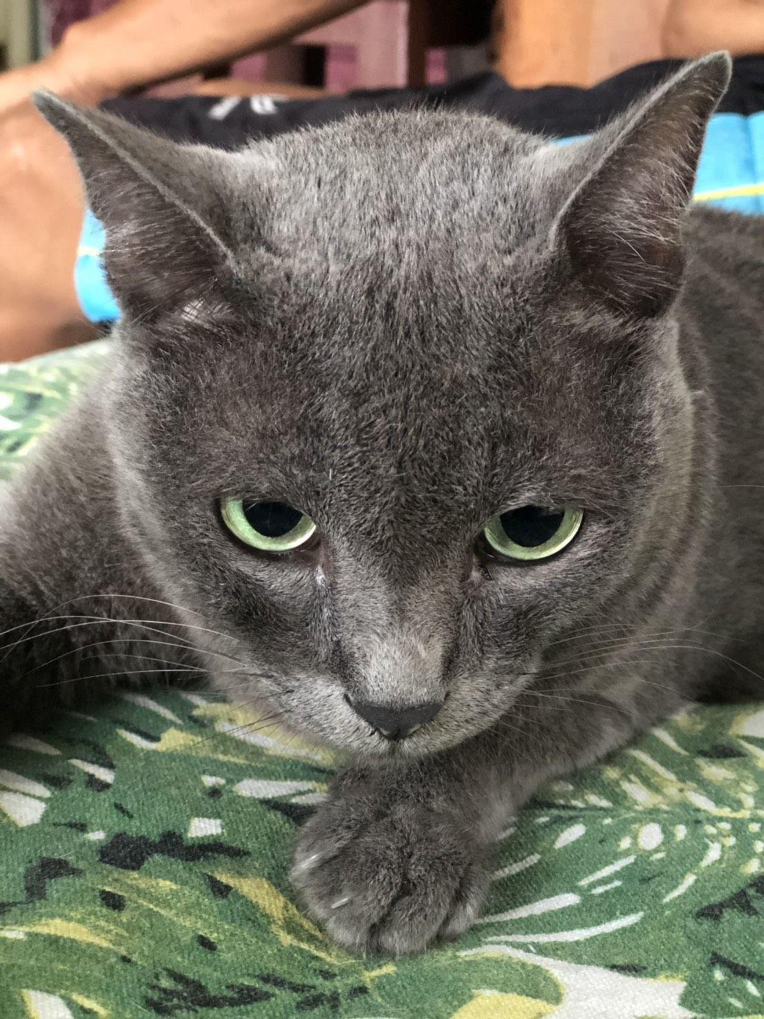 ป กพ นในบอร ด Cat