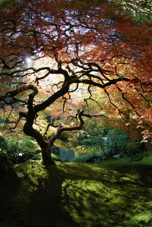 A colorful Japanese garden
