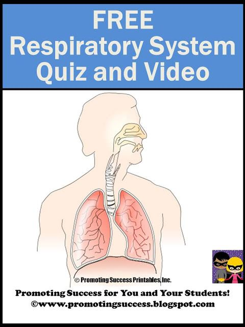 Respiratory System For Kids 5th And 6th Grade Life Science