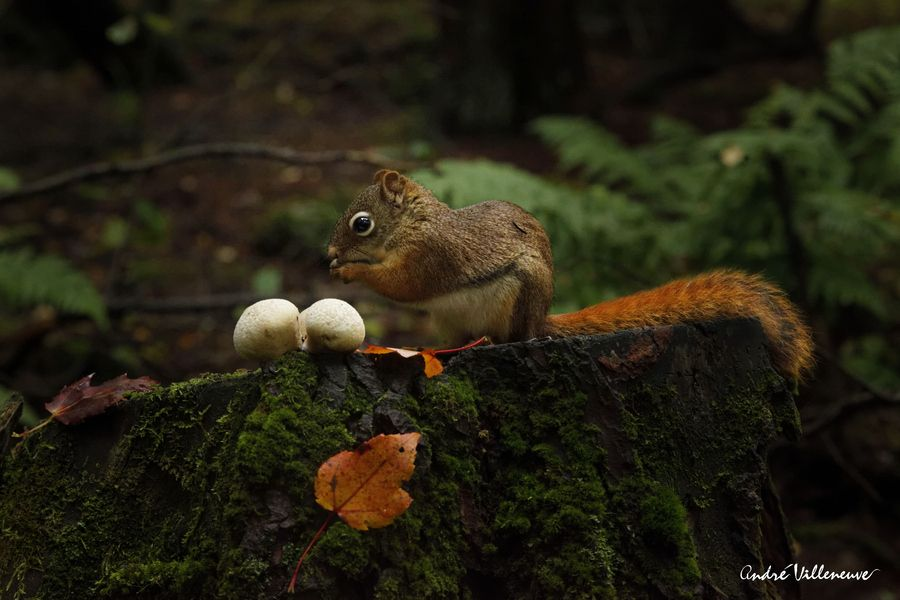 In the green wood by Andre Villeneuve, via 500px