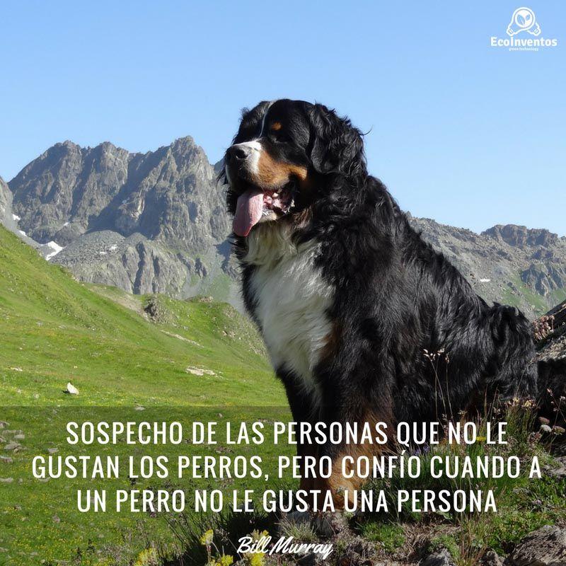 Sospecho de las personas que no le gustan los perros, pero confío ...