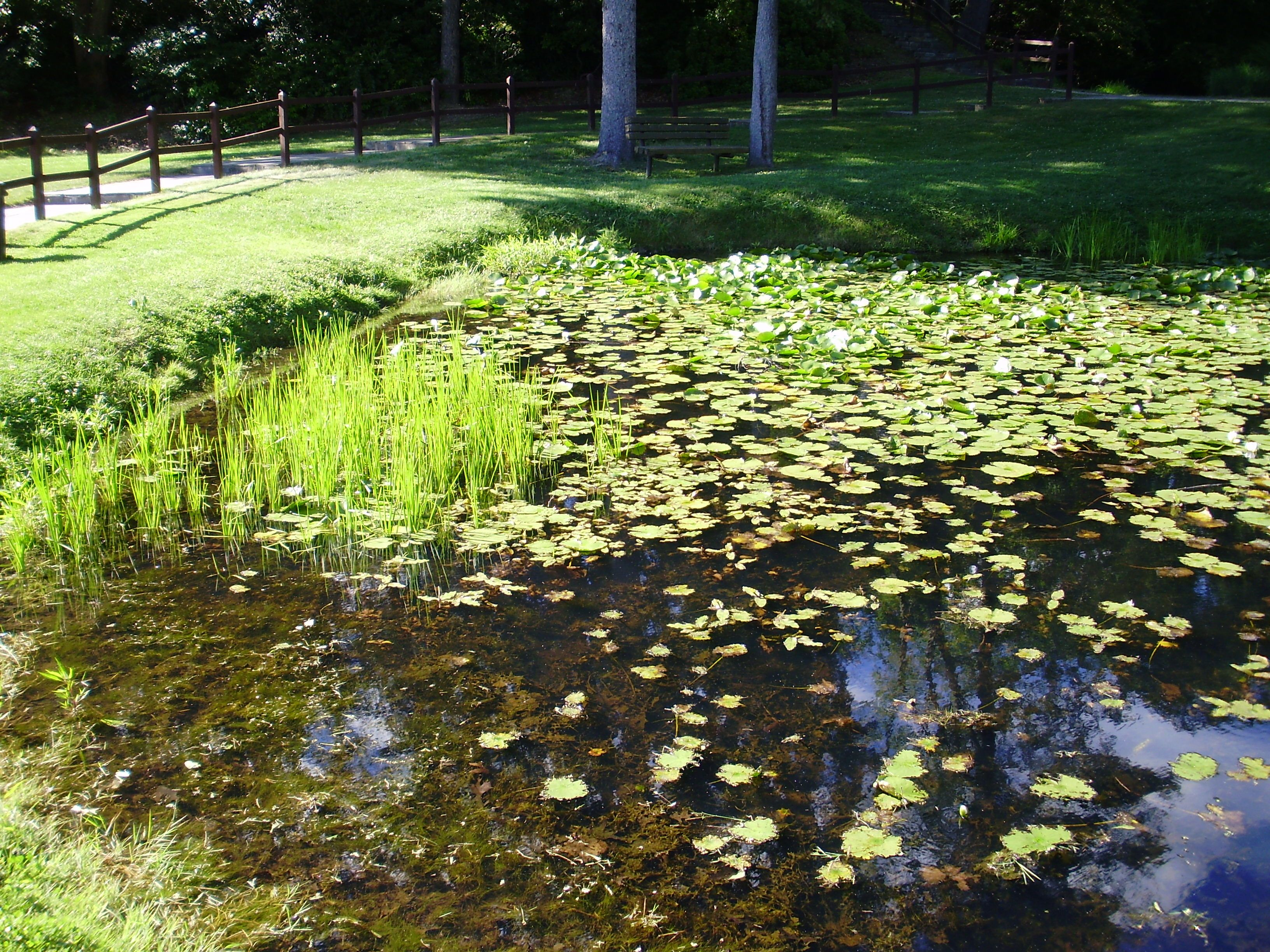 How to get rid of pond algae your ultimate guide for Algae in fish pond