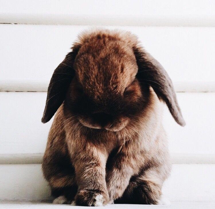 считают, что фото плачущий зайка кролик решите распечатать