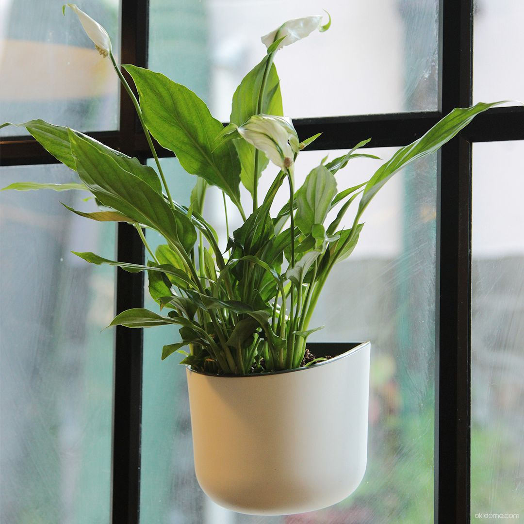 The Eden Suction Planter From Okidome. Great For Homes, Offices, Cafes.