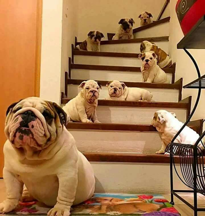 Excellent Car Alarm Installation Wiring Diagram Thick Guitar 3 Way Switch Round 2 Wire Car Alarm Ibanez Dimarzio Youthful Tele 3 Way Switch GrayAdding An Electrical Circuit Oh My Goodness! They Are Adorable   Dogs And Puppies   Pinterest ..