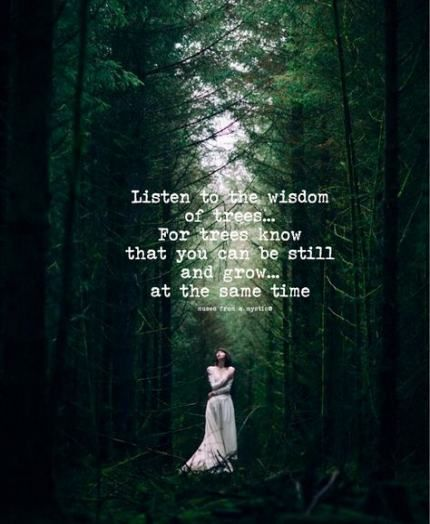 50+ Ideas Mother Nature Quotes Woods