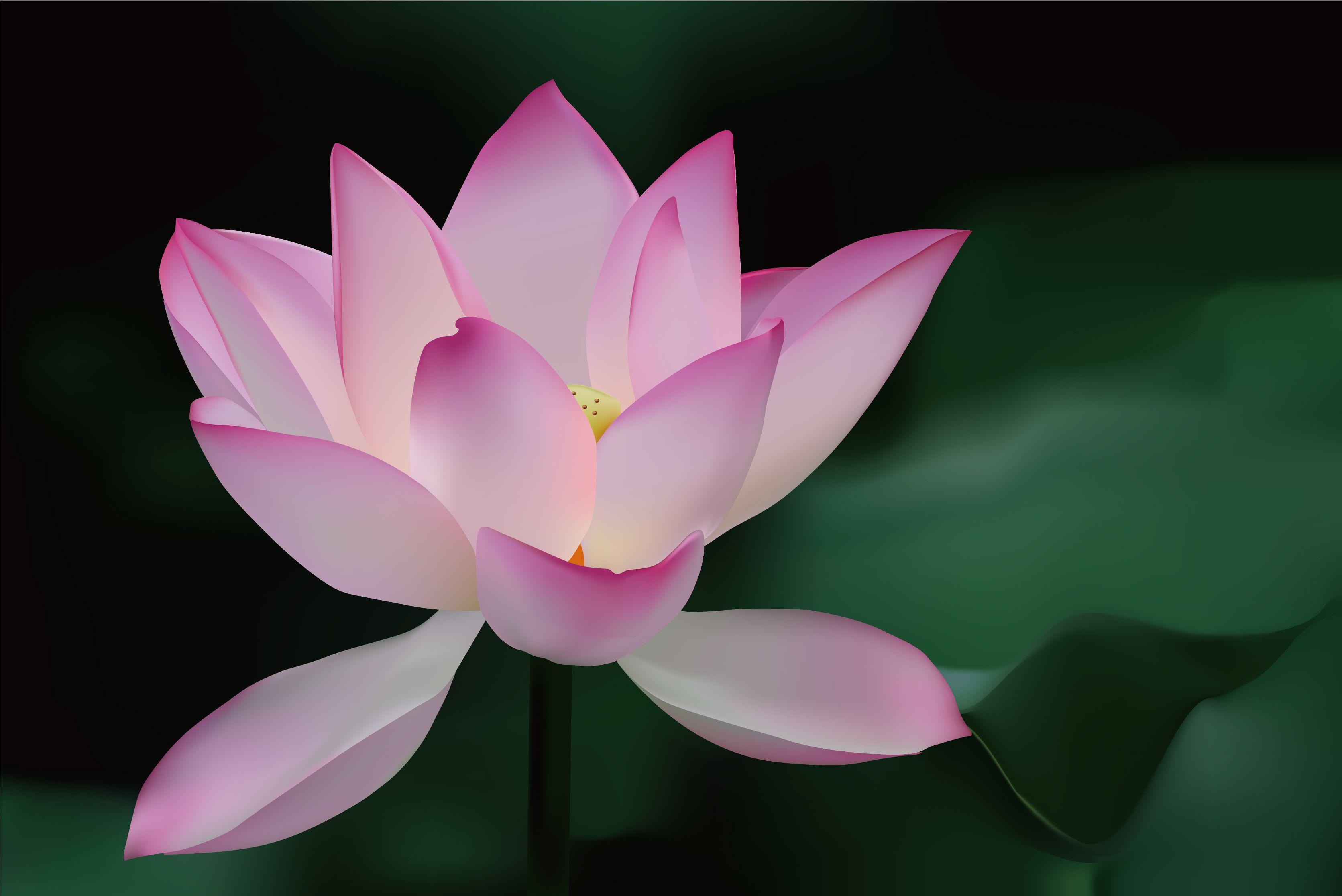 Lotus Lotus Flowerabstract Divine Lotus Flower Vector