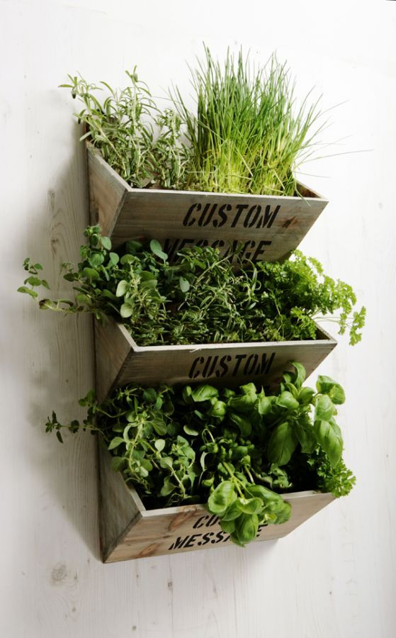 Personalised Large Wall Mounted Herb Planter Kit