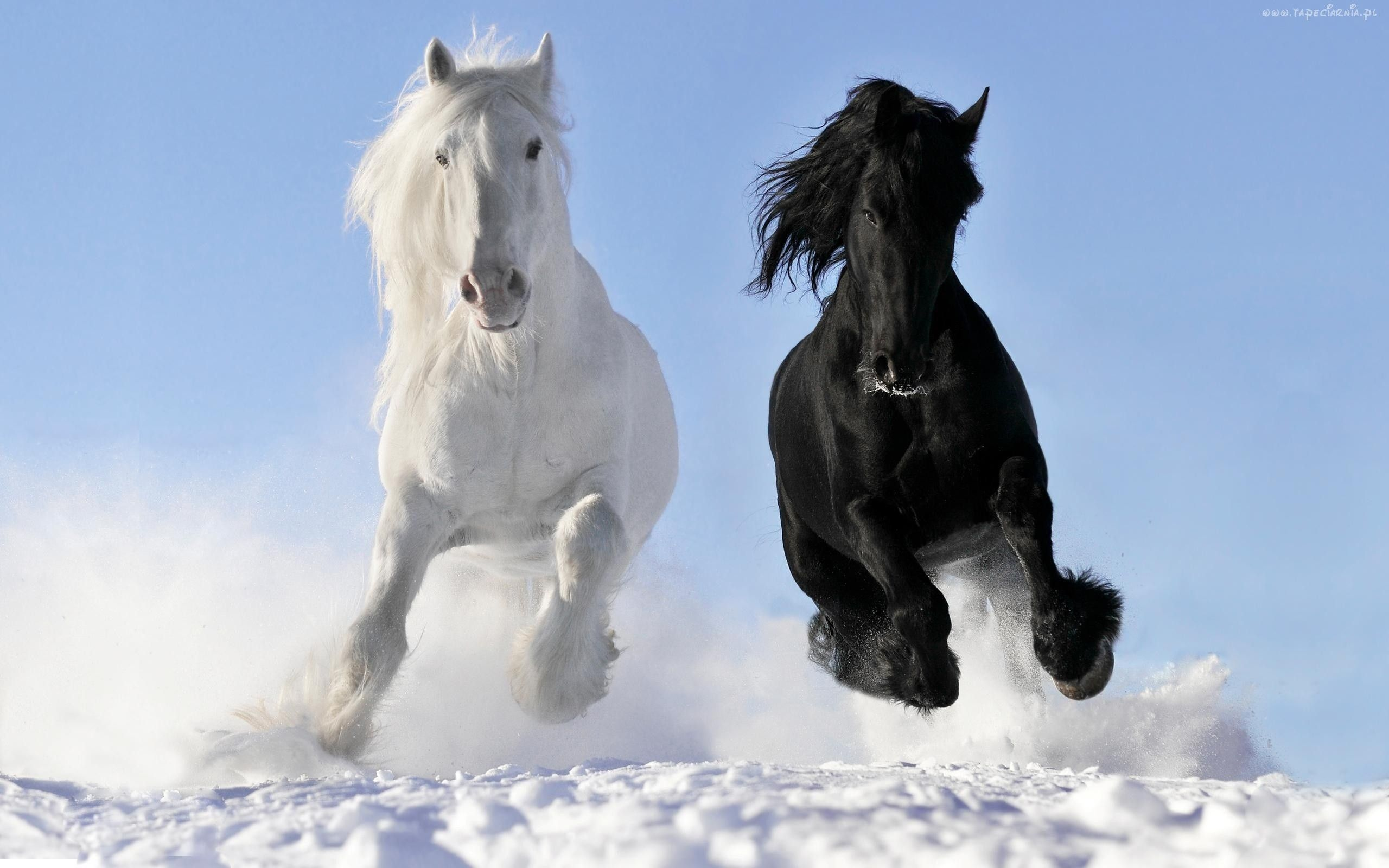 Must see Wallpaper Horse Stunning - d344514c9e8602ba1e42d4641fc33ba2  Collection_465140.jpg