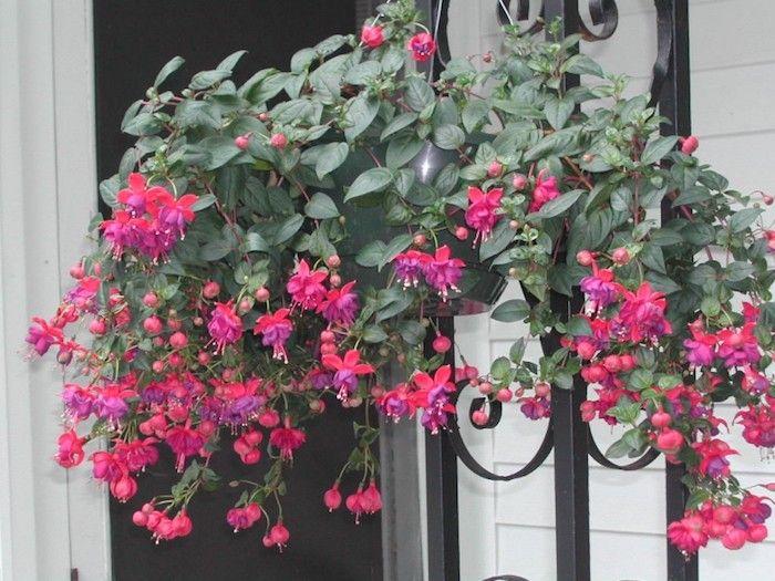 plante tombante jardini res et suspensions pinterest jardini re balcon jardini res et. Black Bedroom Furniture Sets. Home Design Ideas