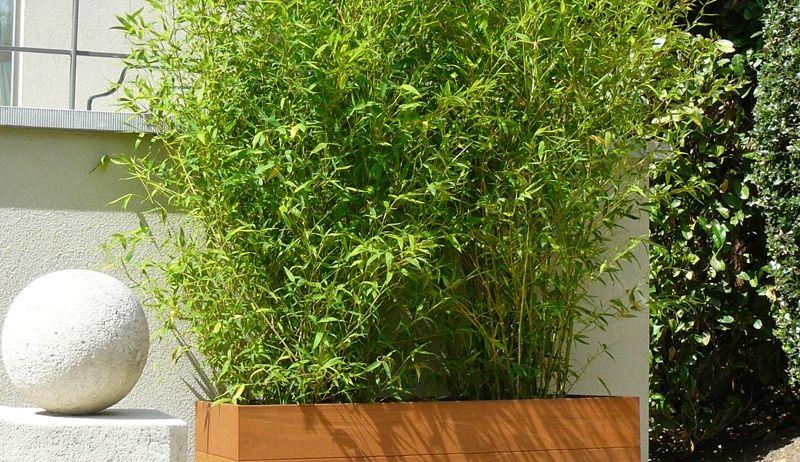 Exemples de r alisations en bambous pour ext rieur for Bambous artificiels exterieur