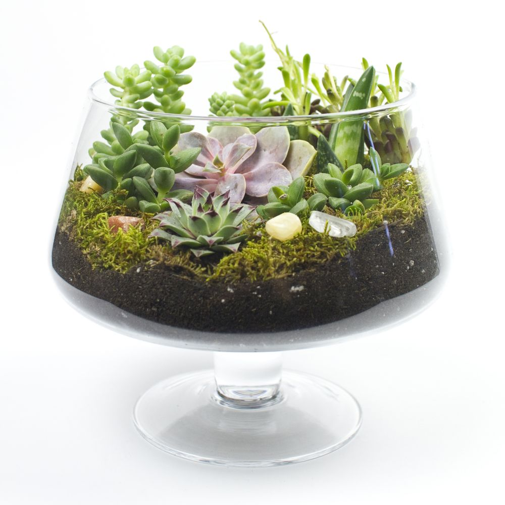 Glass Centerpiece Kits : The brandy snifter diy succulent terrarium kit