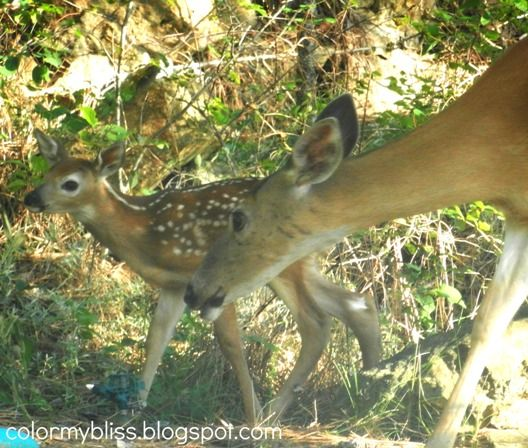 A Happy Surprise, Mama Deer and Her Sweet Baby