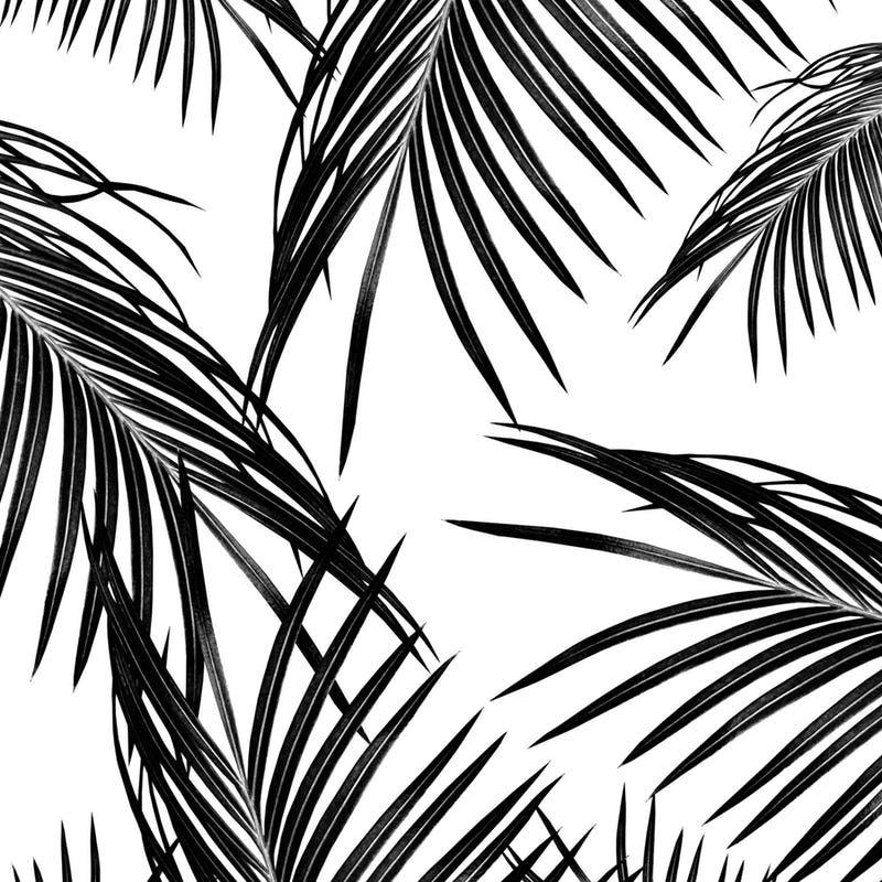 Black Palm Leaves Dream 1 Wall mural Leaves wallpaper