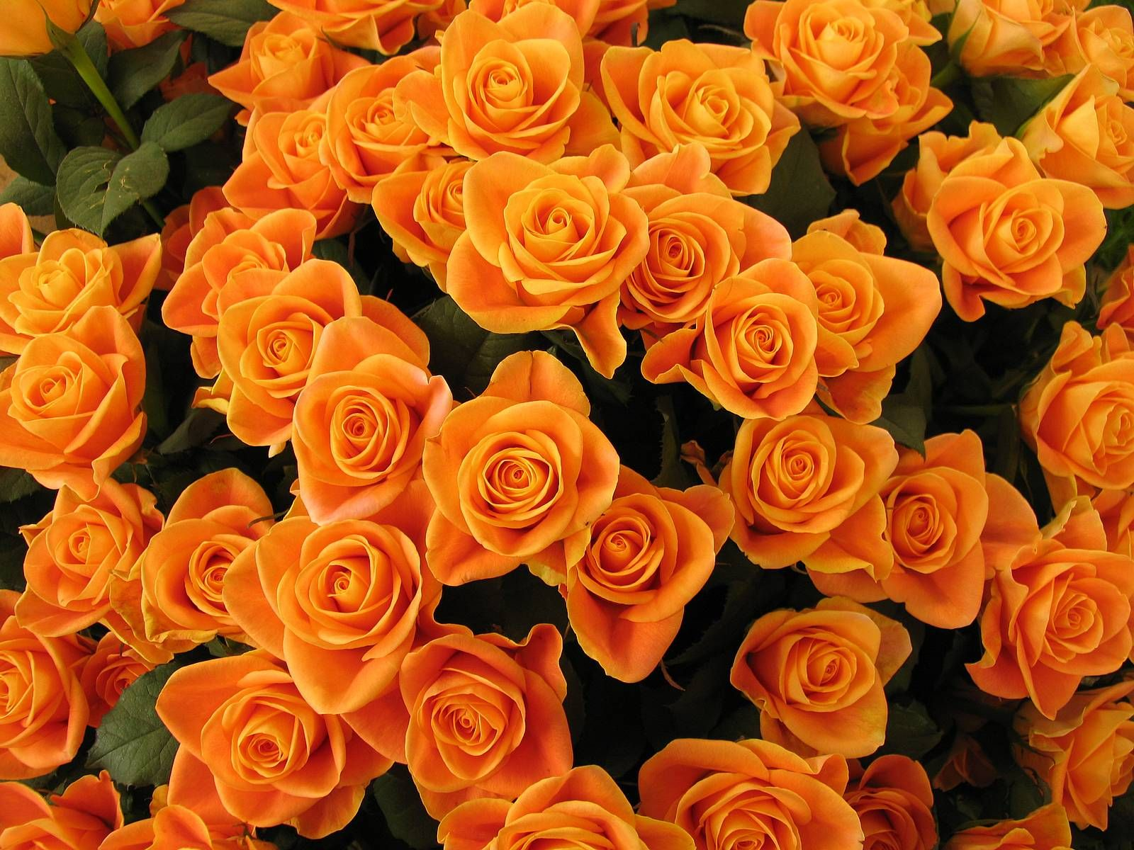 Orange Flowers Cute Wallpapers & Backgrounds Photos