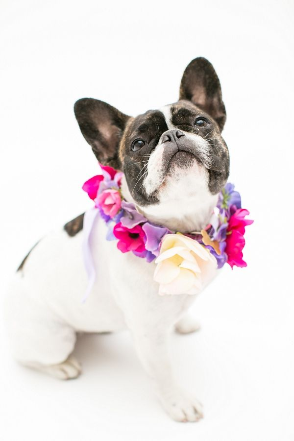 Silk Flower Dog Collars Pets At Weddings Dog At Wedding Dogs At Wedding Cupid Collars Bespoke Dog Collar Flow Girl And Dog Dog Flower Collar Dog Pictures