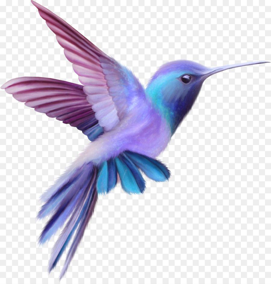 Hummingbird Free Content Clip Art Color Cute Birds Hummingbird Drawing Hummingbird Art Hummingbird Painting