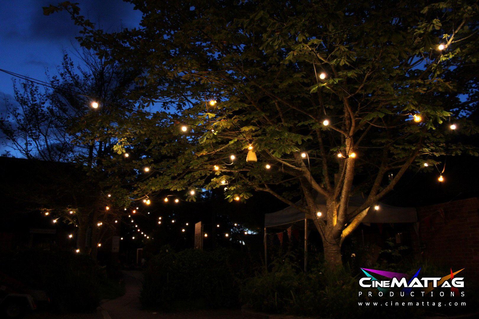 Festoon lighting in trees Event Lighting