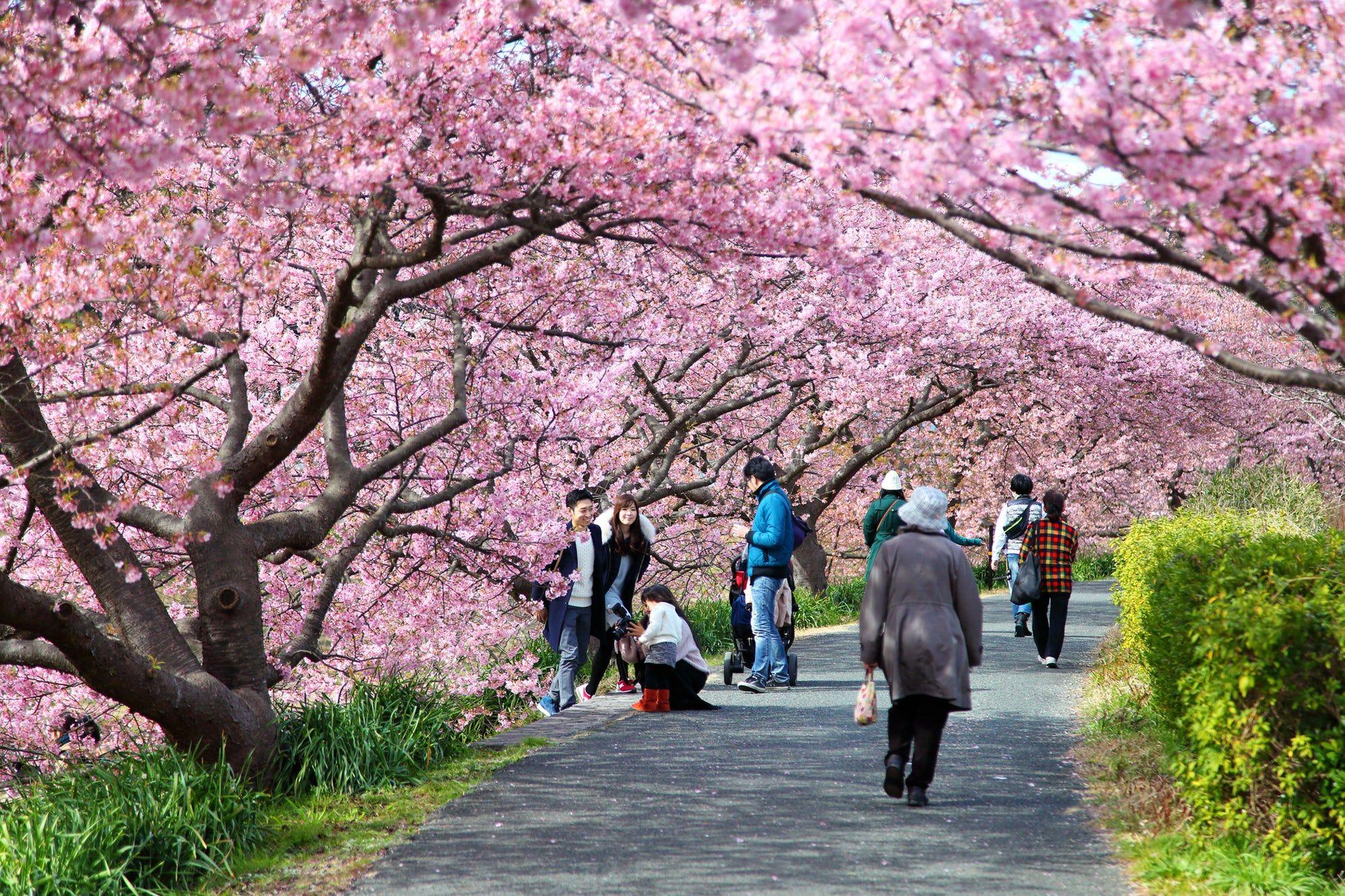 The Beautiful Sakura Season In Japan Japan Beautiful Photo Spots
