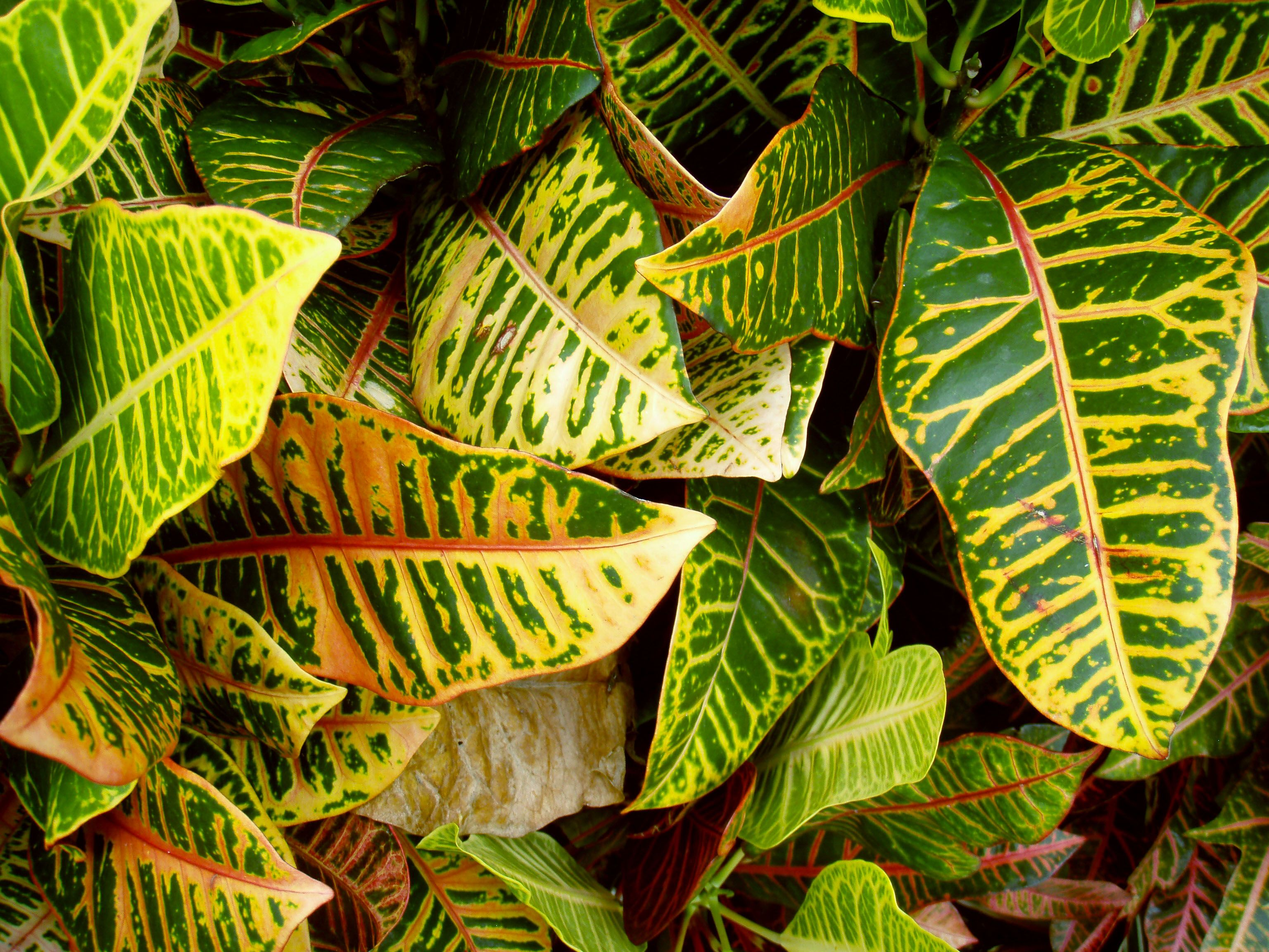 Free Plant Identification