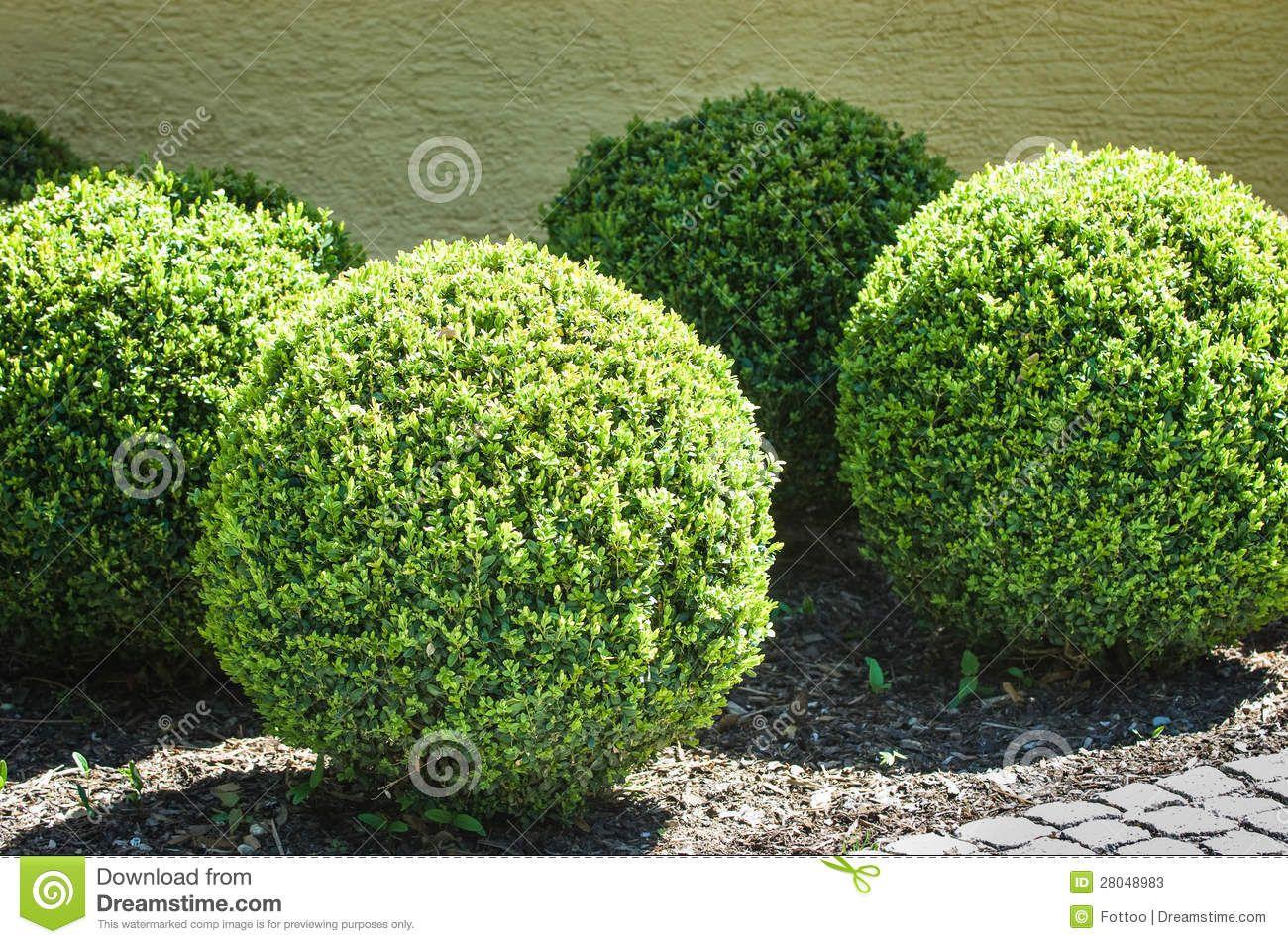 bushes Google Search Bushes Shrubs and Plants Pinterest
