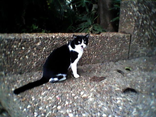 Tel Aviv Mustache Alley Cat