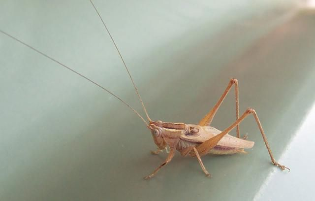 How To Get Rid Of Crickets In Your Garage