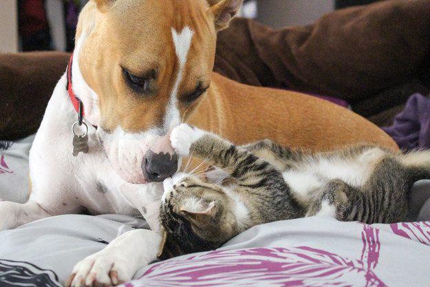 Pit Bulls Are The Most Aggressive Dog Breed Aggressive Dog