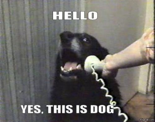 Hello. Yes, this is dog - Famous dog meme