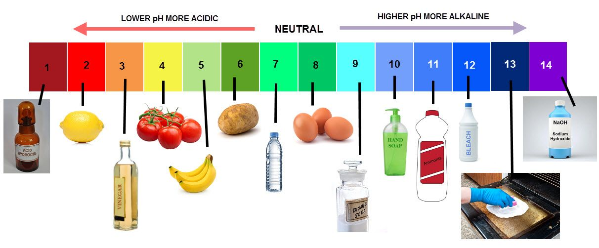 pH Scale Worksheet - EdPlace | Science, Colour images ...
