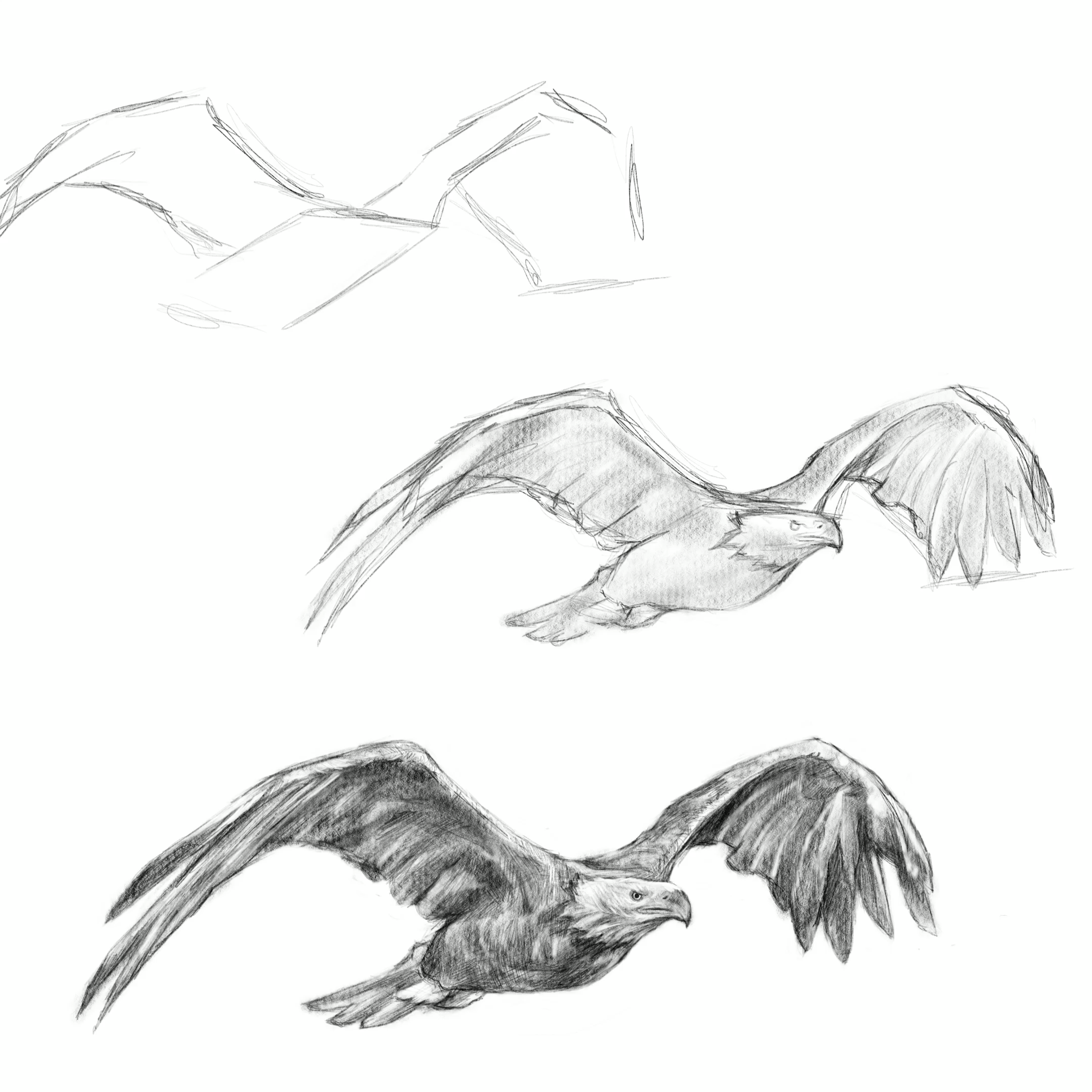 Photo of Learn how to draw an eagle, drawing tutorials, techniques, easy steps, art education