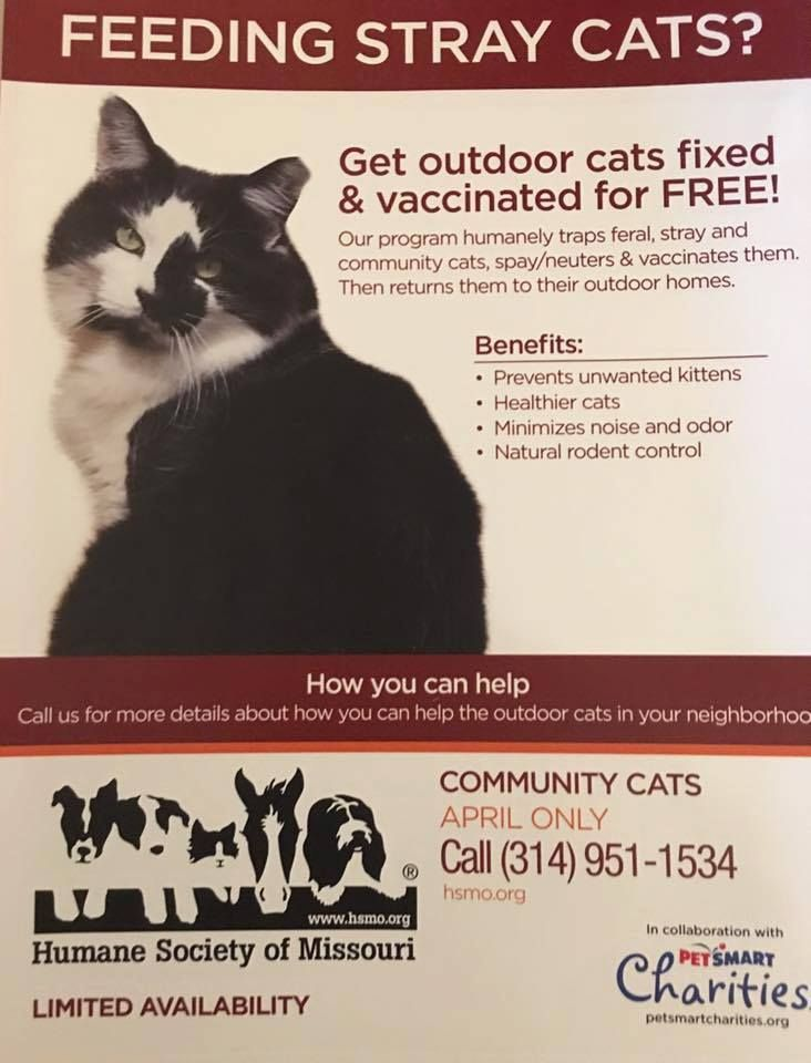 Pin By Chief Riley On Chief Riley Cat Rescue Natural Rodent Control Cat Rescue Healthy Cat