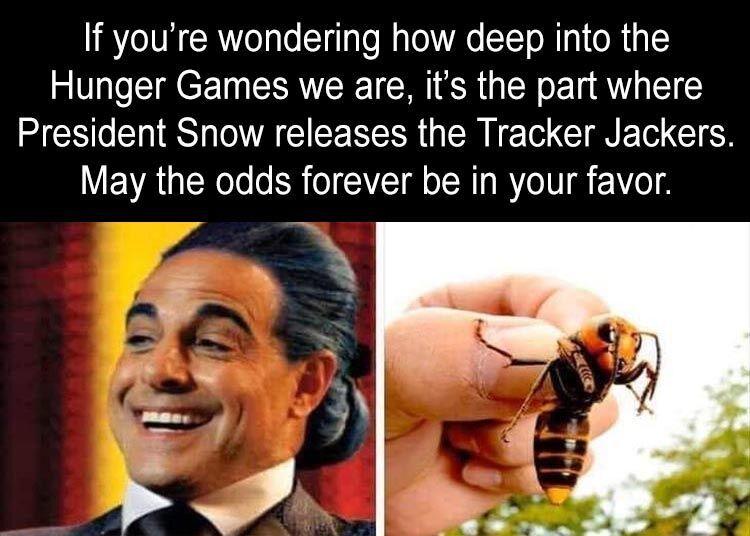 56 Funny Pictures In 2020 Hunger Games Hunger Games Memes Hunger Games Humor