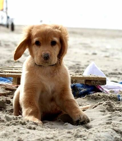 pup at the beach