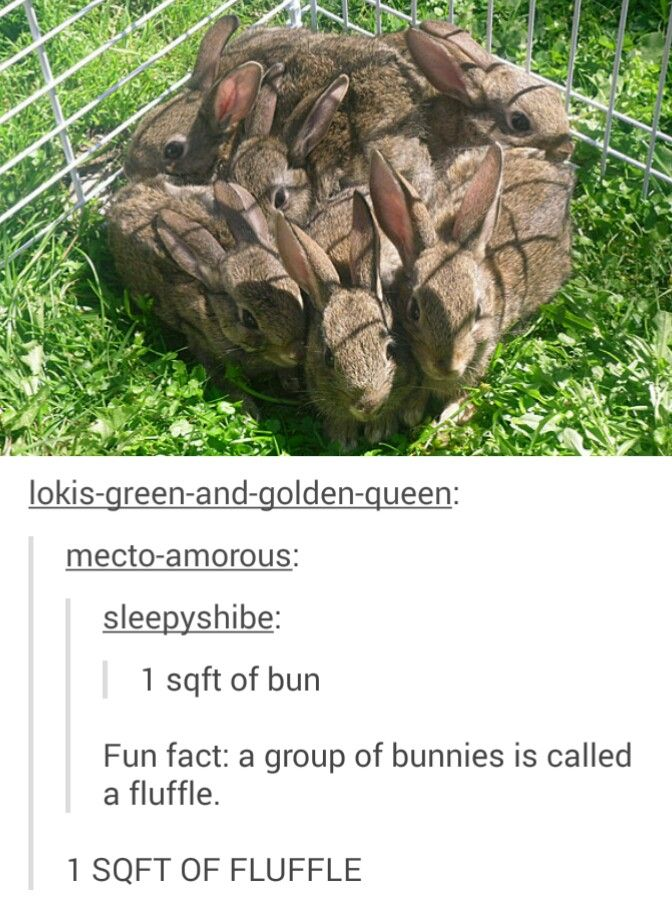 Happy Easter Funny Pictures Best Funny Photos Best Funny Pictures