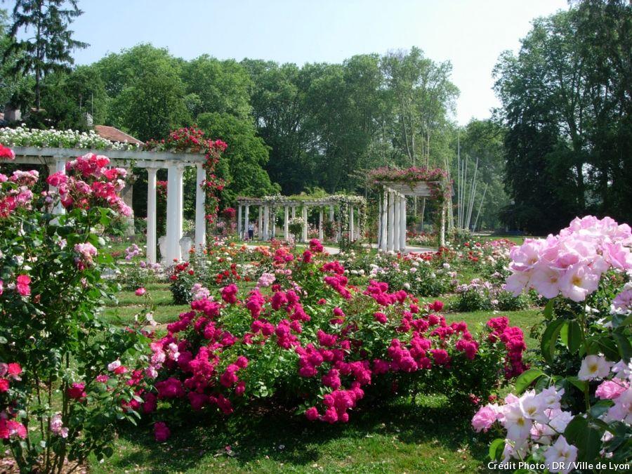 o voir les plus belles roses flowers and gardens pinterest lyon lyon france and lyon city. Black Bedroom Furniture Sets. Home Design Ideas
