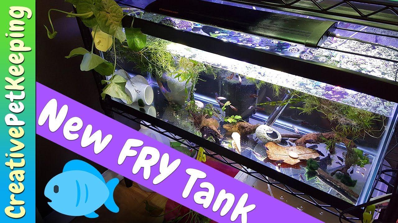 Fish for new aquarium - Goodbye Fish And New Aquarium For Baby Fish Fry Fish Fan Friday Vlog