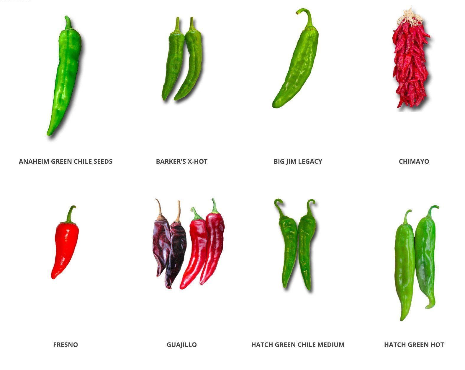 How to grow peppers seeds soil organic nongmo seed