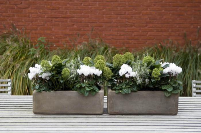 Top 10 des plantes pour jardini res d 39 hiver jardin for Plante terrasse hiver