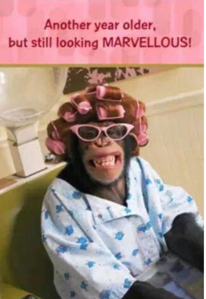 Pin By Adgovando On Happy Birthday Quotes Happy Birthday Sister Funny Birthday Wishes Funny Happy Birthday Meme