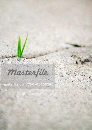 Grass Growing in Concrete  – Image © Mark Leibowitz / Masterfile.com: Creative Stock Photos, Vectors and Illustrations for Web, Mobile and Print