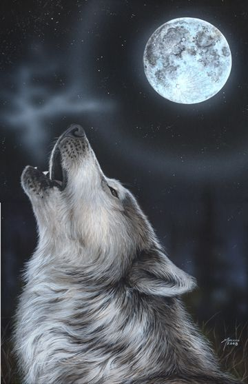 Midnight Song By Marilyn Barkhouse Loup Qui Hurle Peinture De