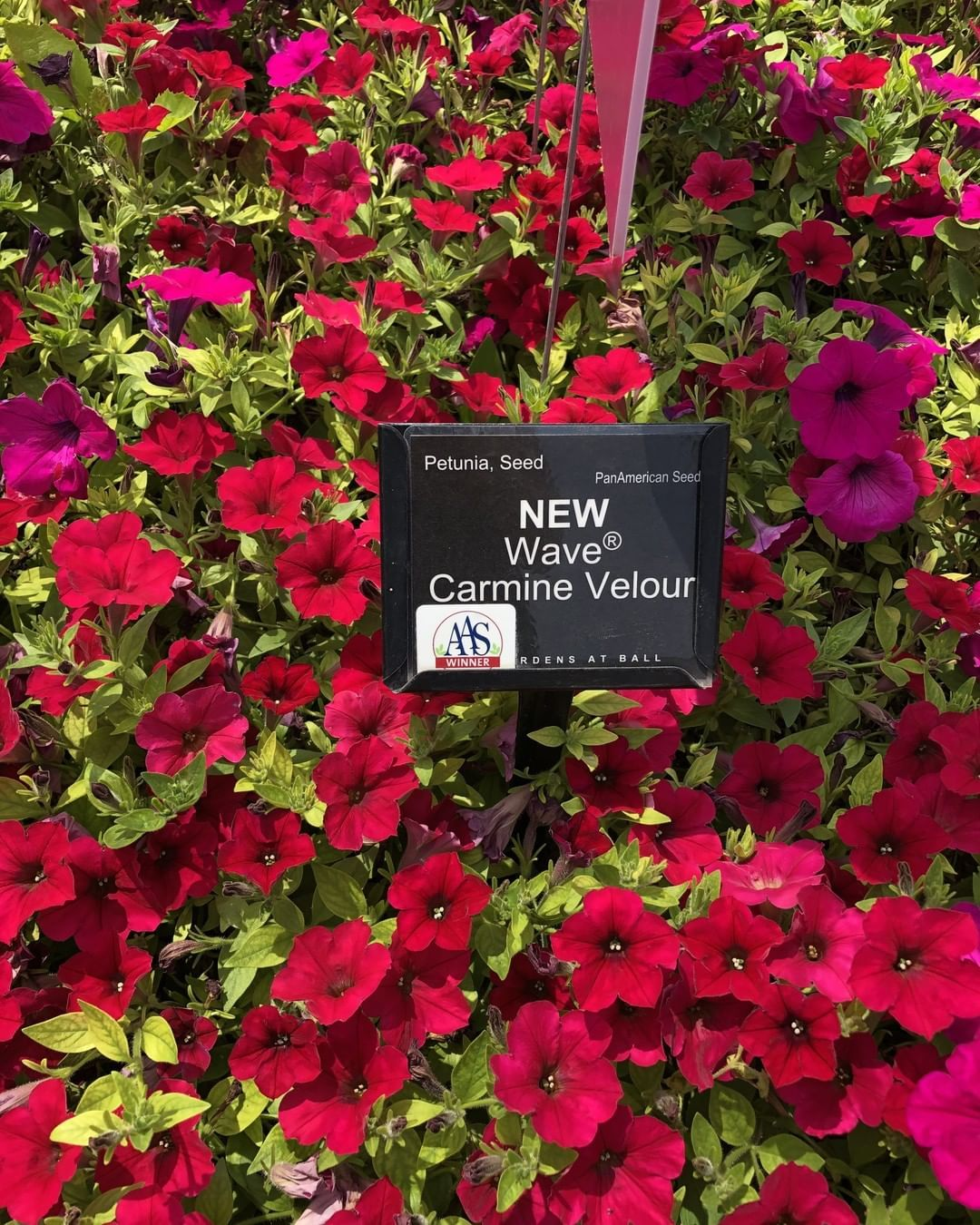 Nationalgarden Posted To Instagram This Newest Color Of The