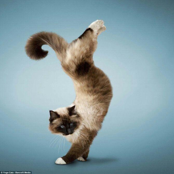 Yoga Katze Susse Hunde Und Katzen Katzenhaltung Susseste Haustiere